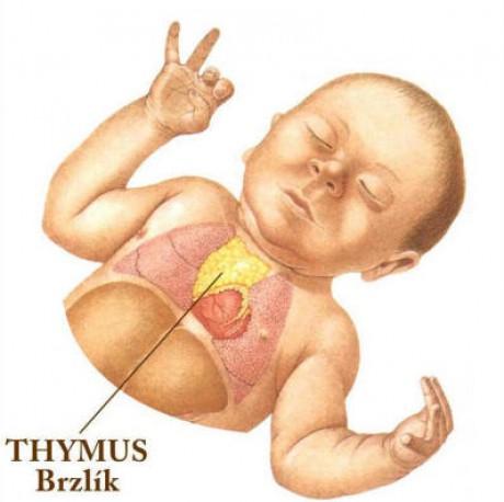 Novorozenec Thymus Brzlik Jpg